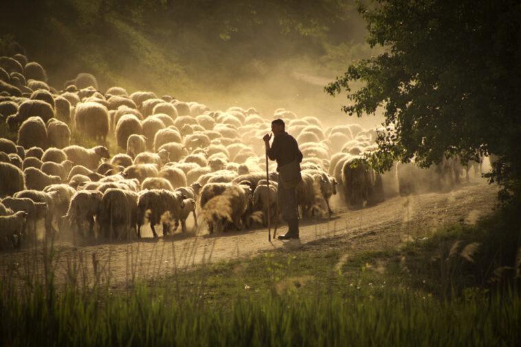 fiul unui cioban
